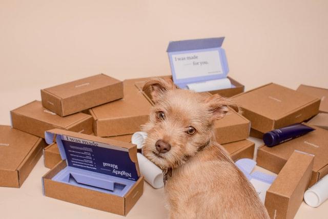 通販 犬 画像